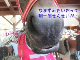 tora_namazu